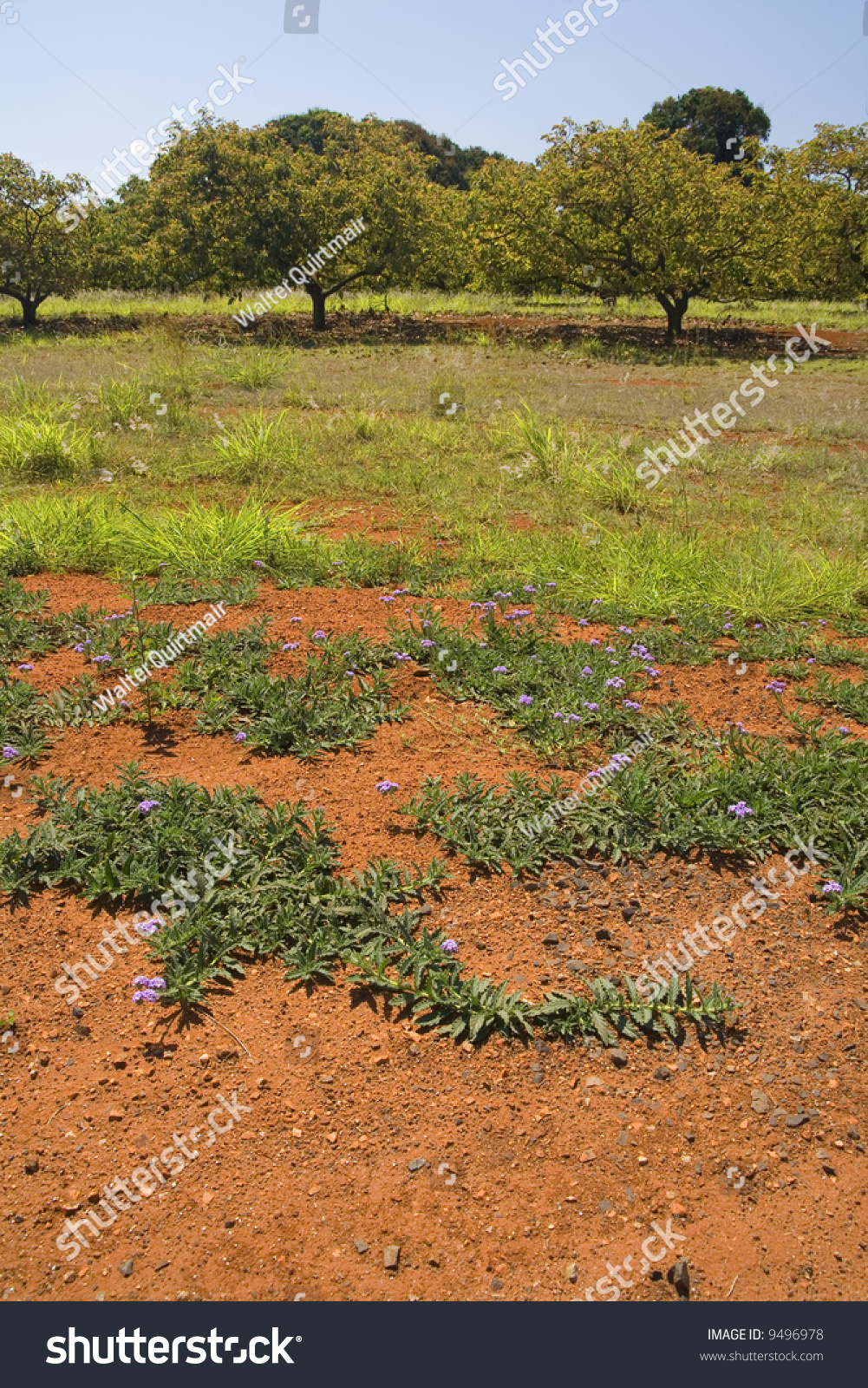 Red soil green plants australias countryside stock photo for Soil and green