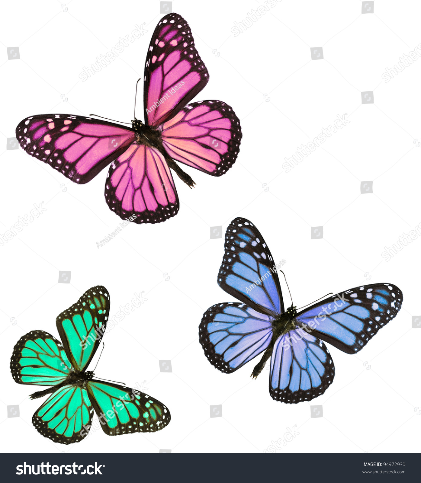 pink blue green monarch butterflies isolated stock photo 94972930