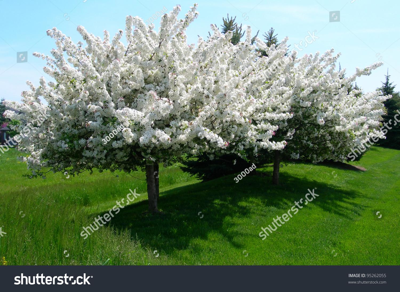 landscape white flowering trees spring easter stock photo, Natural flower