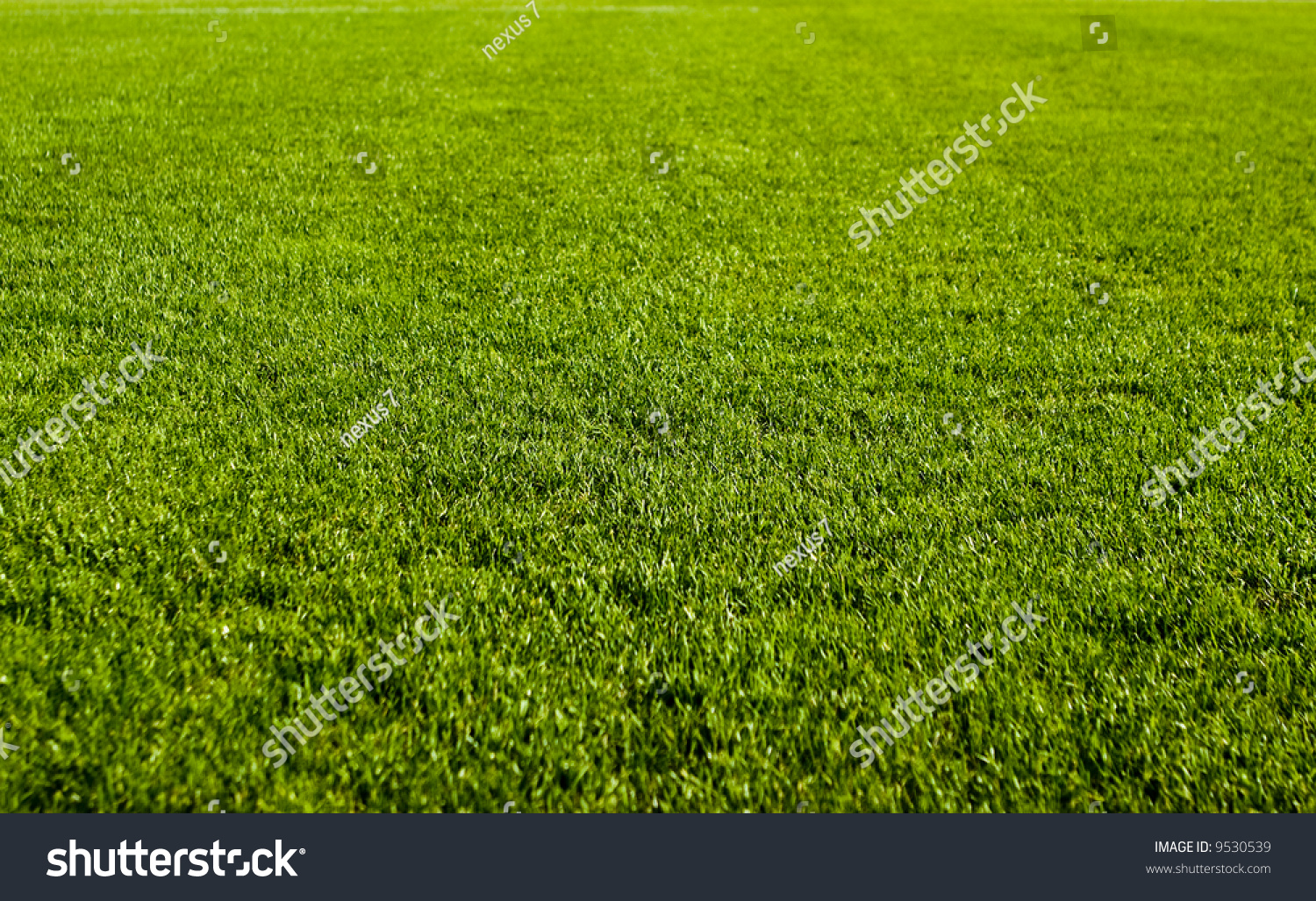 Nice Green Grass Texture Form A Soccer Field Stock Photo