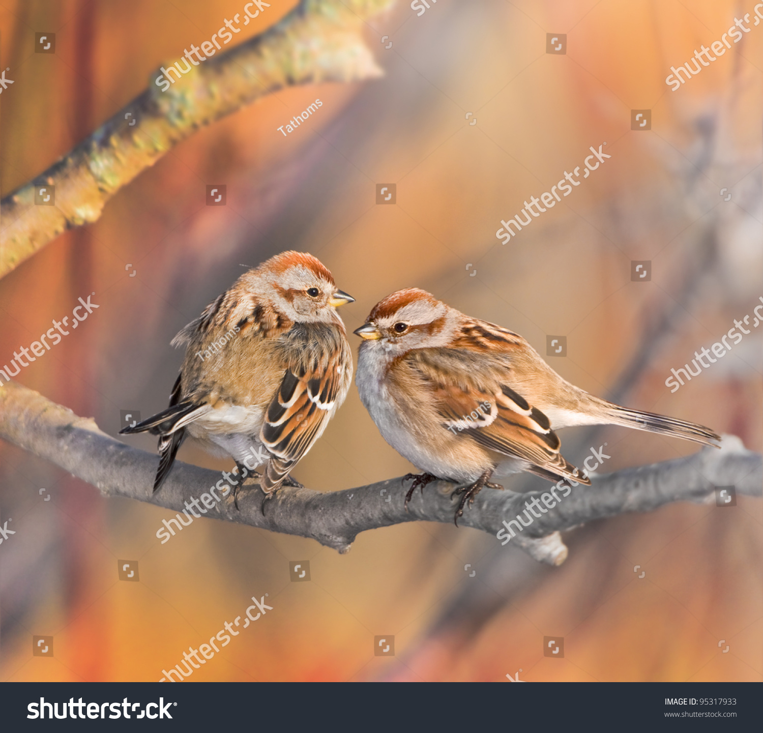 stock-photo-american-tree-sparrow-couple