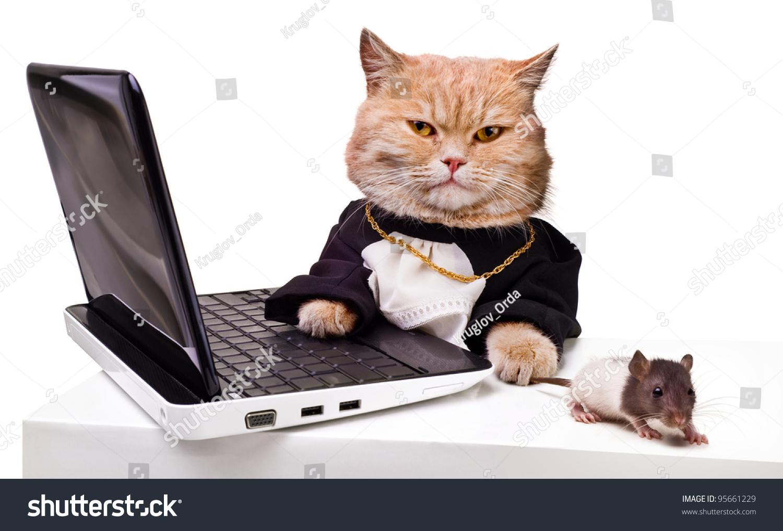 intelligent cat mouse laptopanimal academic robes stock photo 95661229 shutterstock. Black Bedroom Furniture Sets. Home Design Ideas