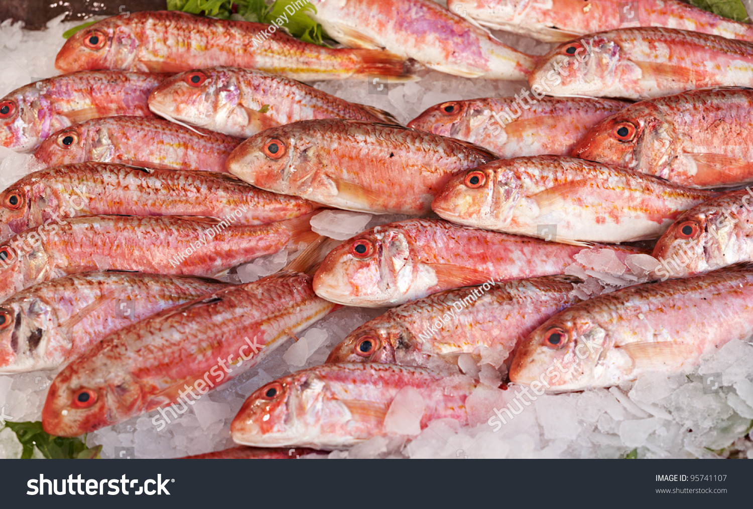 Fresh red mullet sale on fish stock photo 95741107 for Red mullet fish