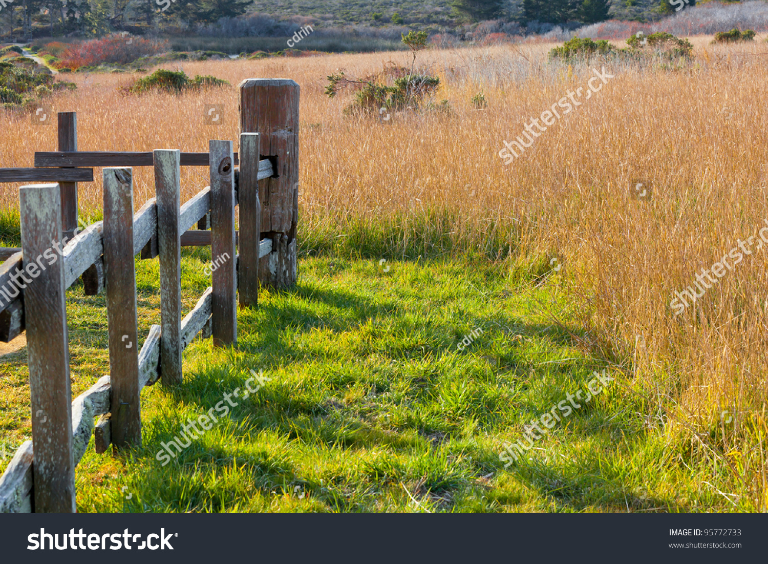 Rustic wooden fence field golden tall stock photo 95772733 shutterstock - Rustic wood fences a pastoral atmosphere ...