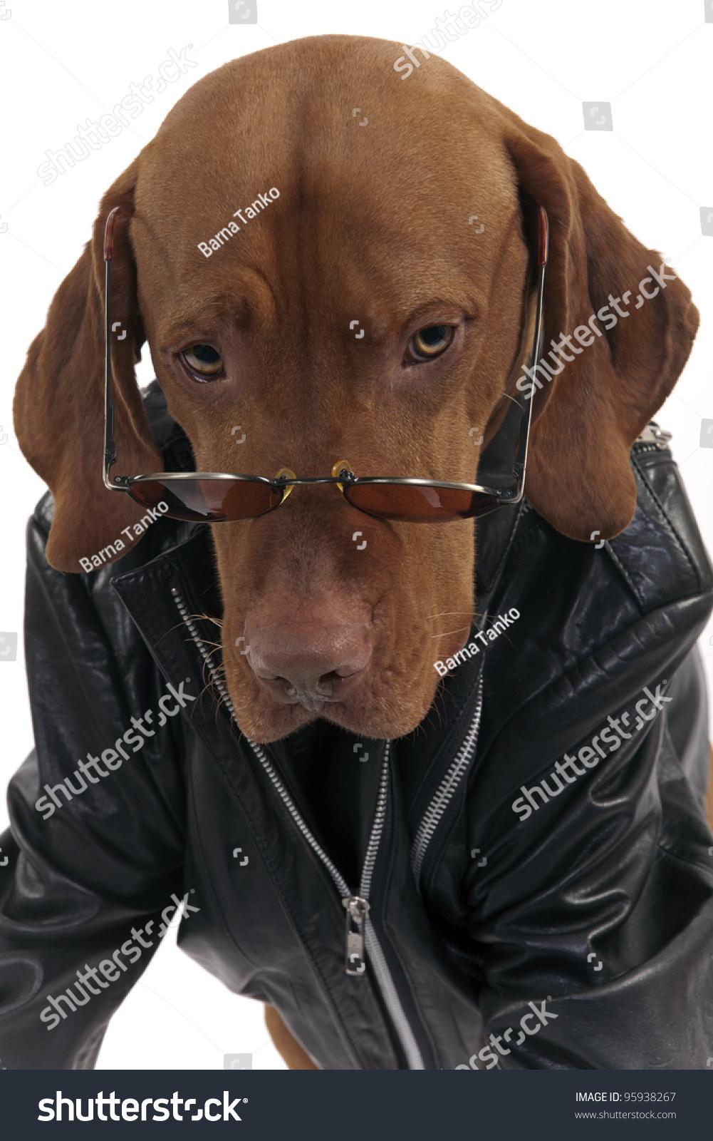 Leather jacket for dogs - Black Brown Leather Dog Coat Jacket Zipper Design Pet Clothes 5