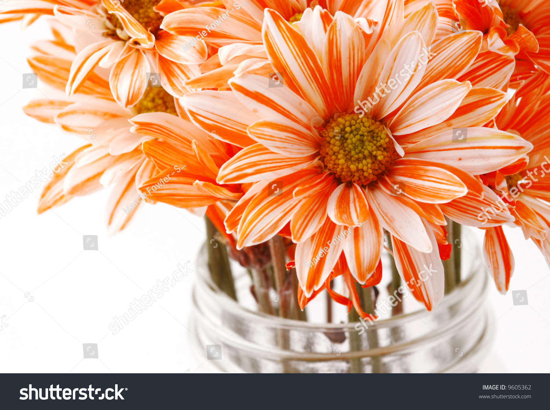 Orange And White Flowers In A Mason Jar Stock Photo