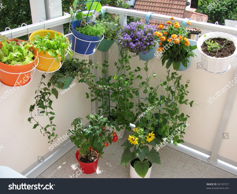 Когда можно выносить комнатные растениЯ на улицу или на балк.