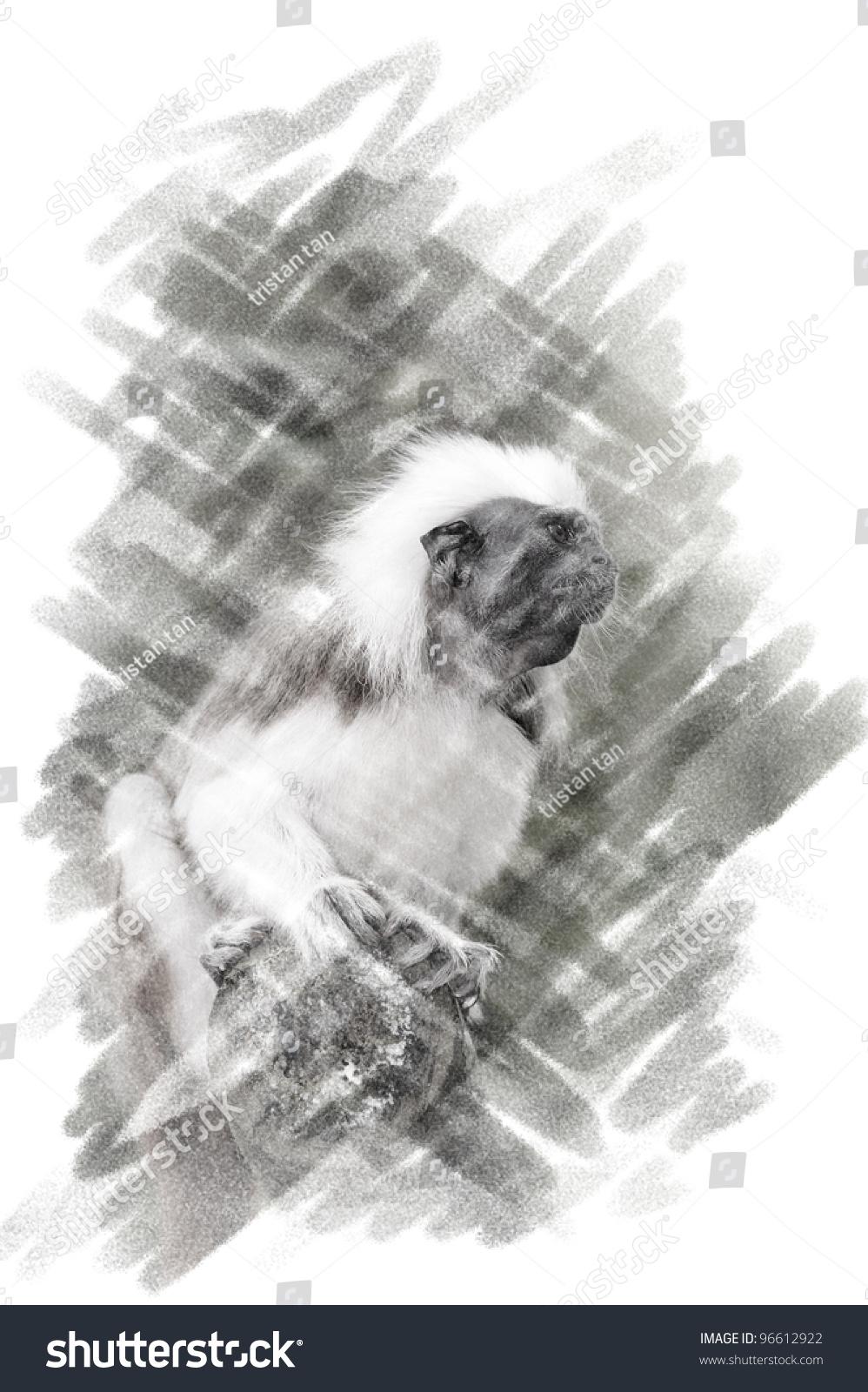 Pencil sketch of cotton top monkey