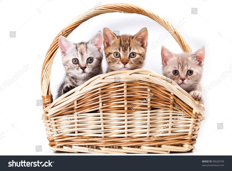 Kittens In Basket On White Stock Photo 96620740 : Shutterstock