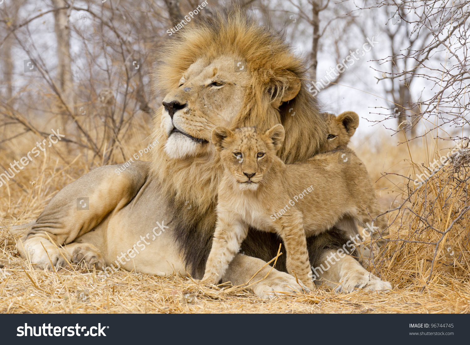 South africa big 5 animals pictures 5 Free