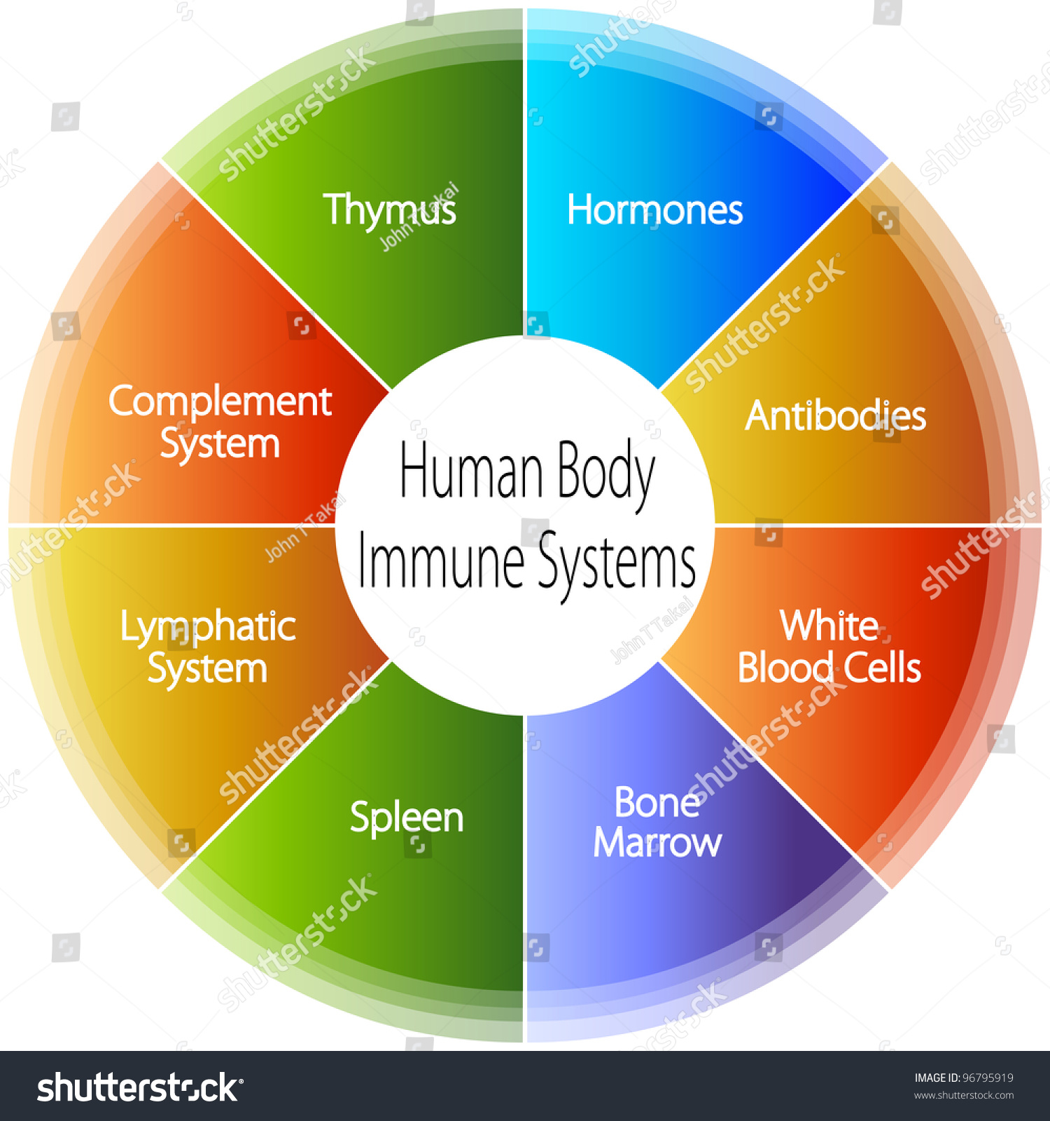 Image Human Body Immune Systems Chart Stock Vektorgrafik Lizenzfrei