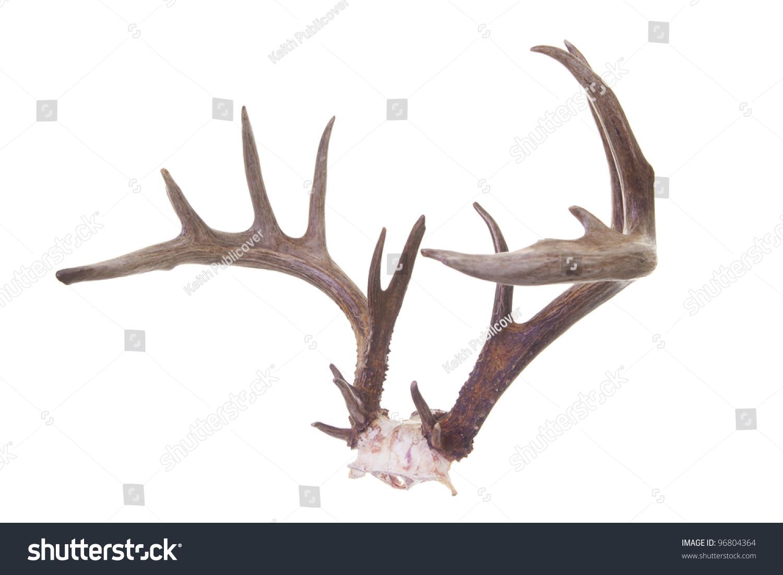 antlers deutsch