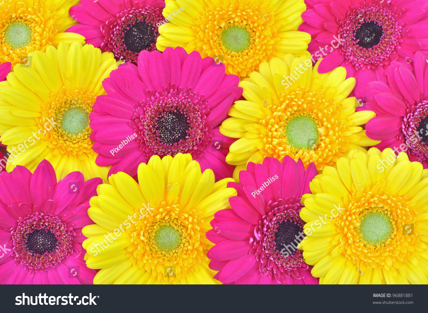 pink yellow flowers background stock photo 96881881