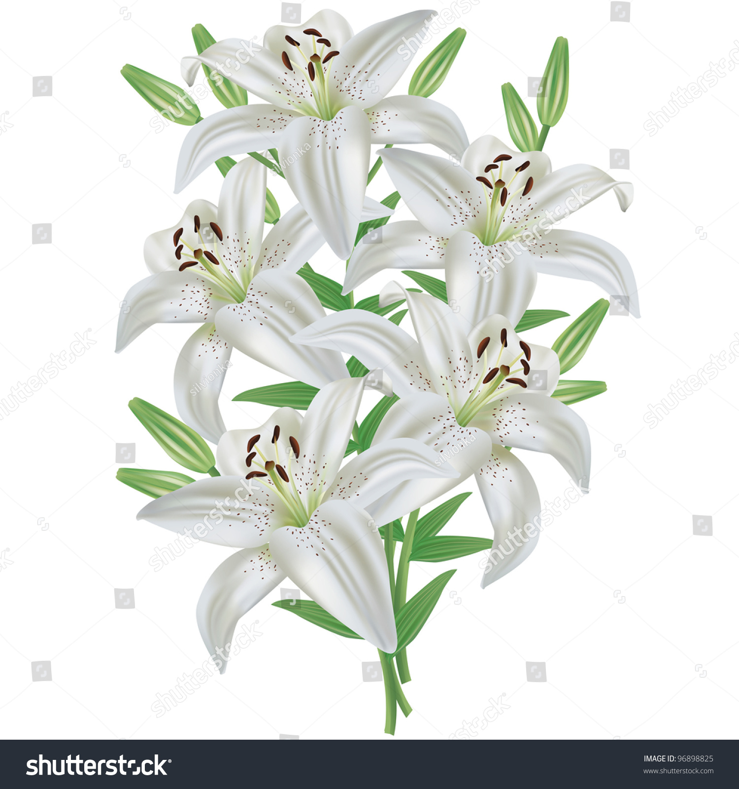 White lily flower bouquet realistic isolated stock vector 96898825 white lily flower bouquet realistic isolated on white background vector izmirmasajfo
