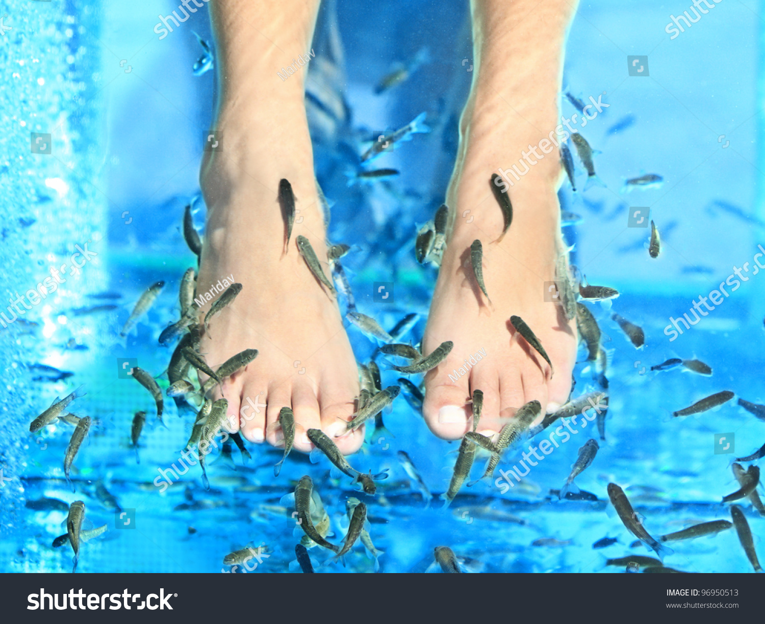 Fish spa pedicure rufa garra treatment feet and fish in for Fish spa treatment