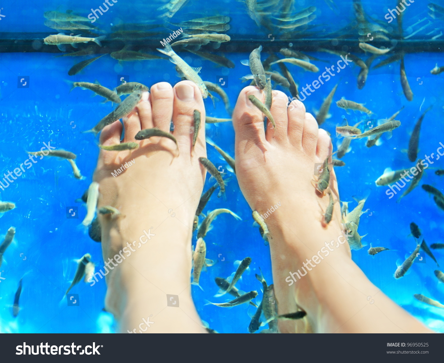 Fish spa pedicure rufa garra fish spa pedicure massage for Fish spa treatment