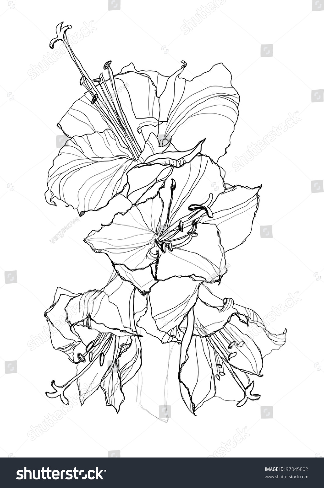 Hibiscus Flower Pencil Drawing On White Stock Vector Royalty Free