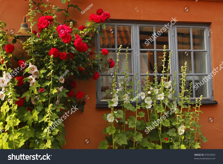 Flowers growing on a house facade in Ystad in Sweden in Europe | EZ ...