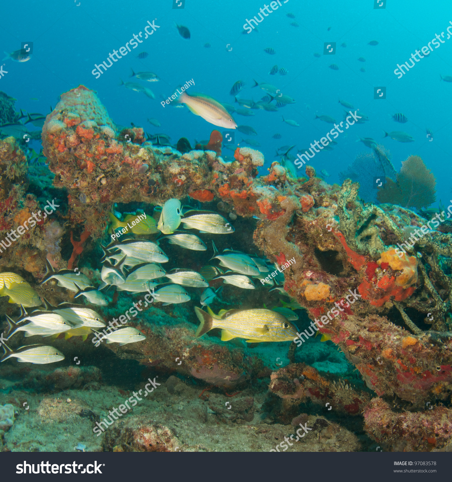 Colorful Fish On Tropical Coral Reef Stock Photo 97083578 - Shutterstock