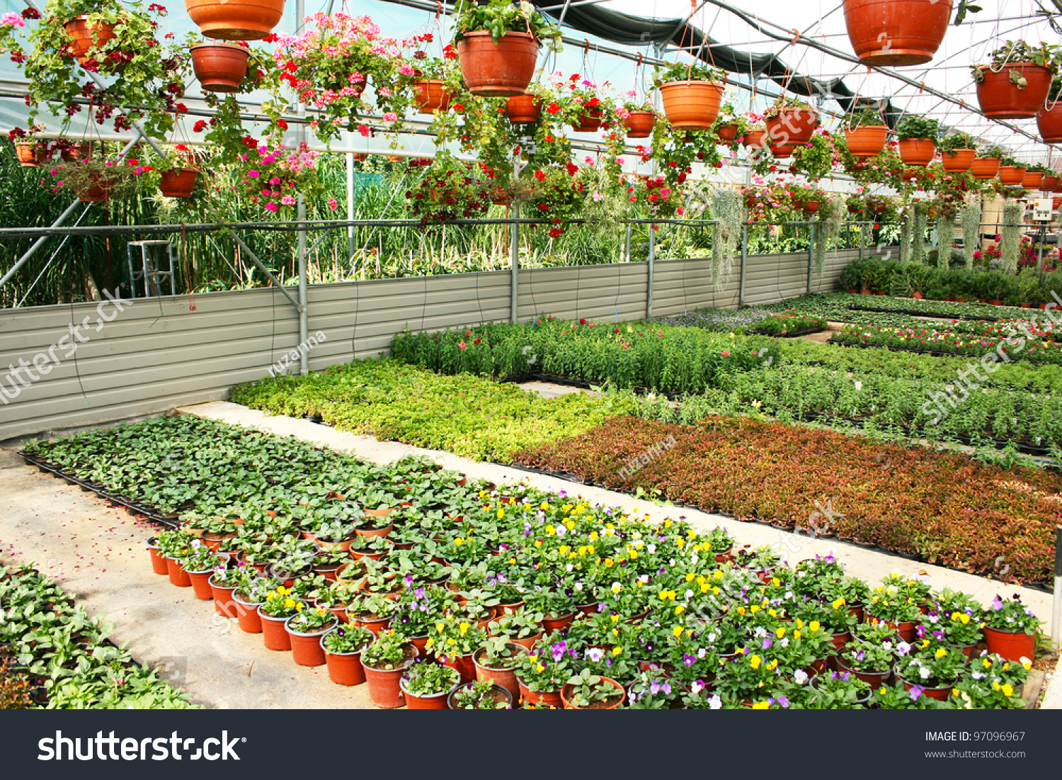 Plantation House With Colorful Flowers In Cyprus Stock Shut