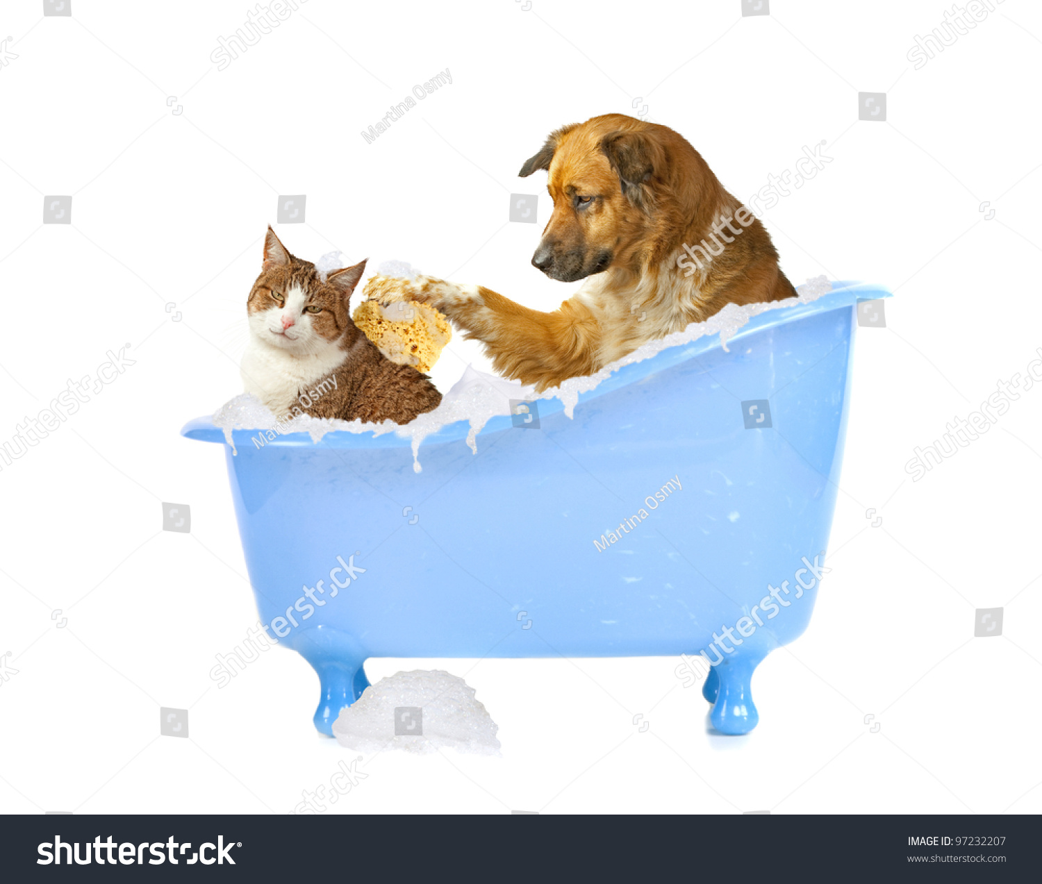 Cats And Dogs Available   But Not Downloading