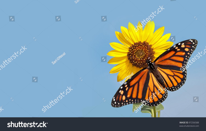 monarch butterfly on sunflower clip art  u2013 cliparts
