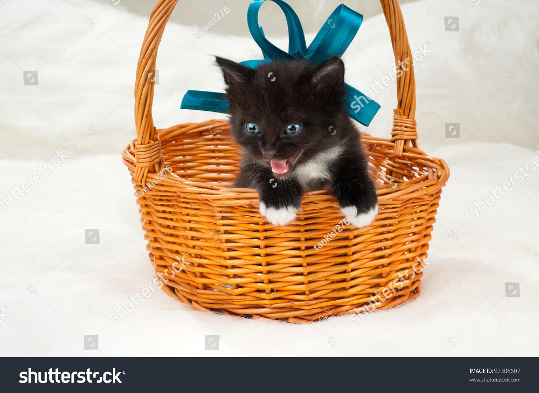 One Black Beautiful Fluffy Little Kittens, In Basket On ...