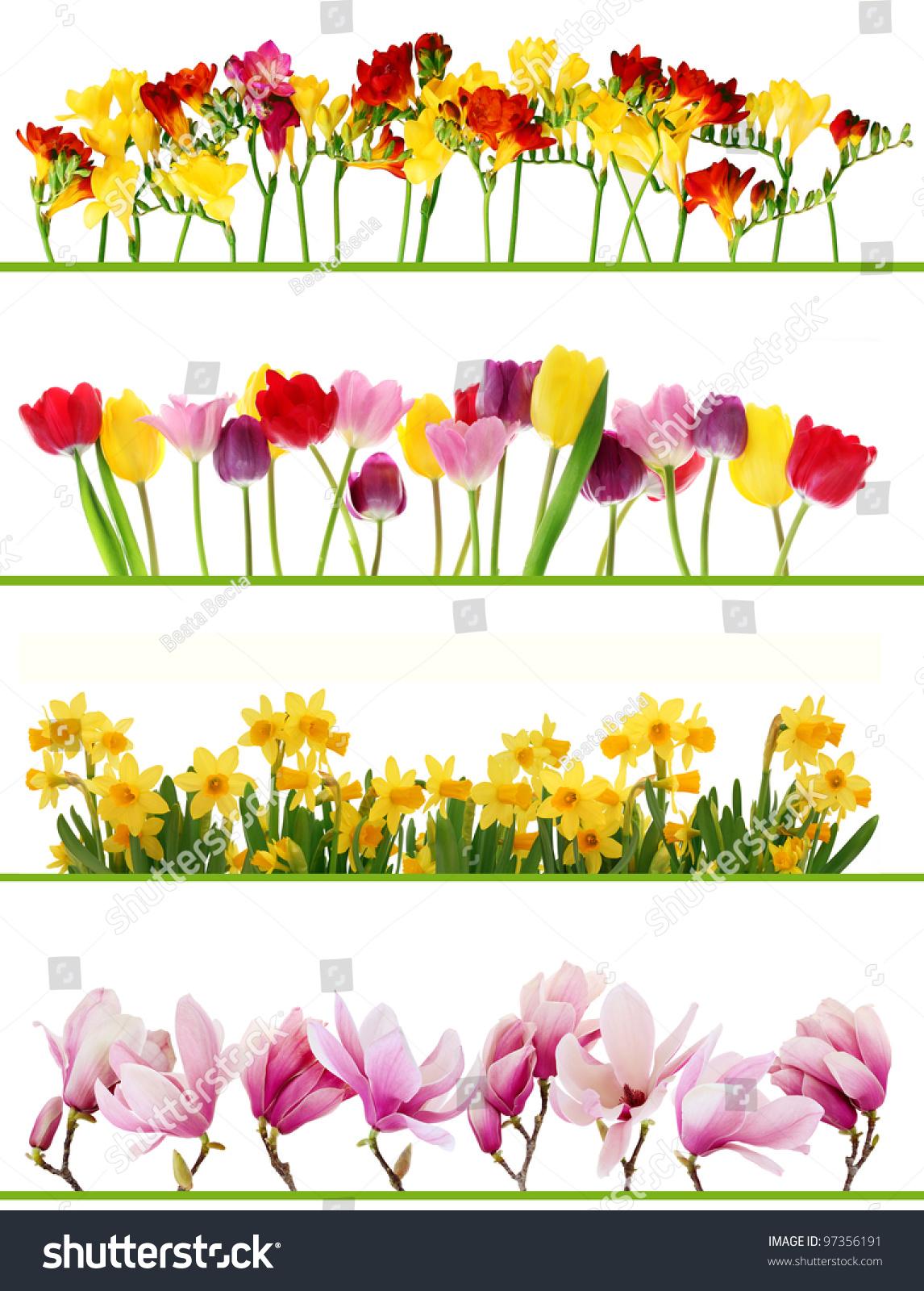 Royalty free colorful fresh spring flowers borders 97356191 stock colorful fresh spring flowers borders on white background tulips daffodils freesia magnolia mightylinksfo