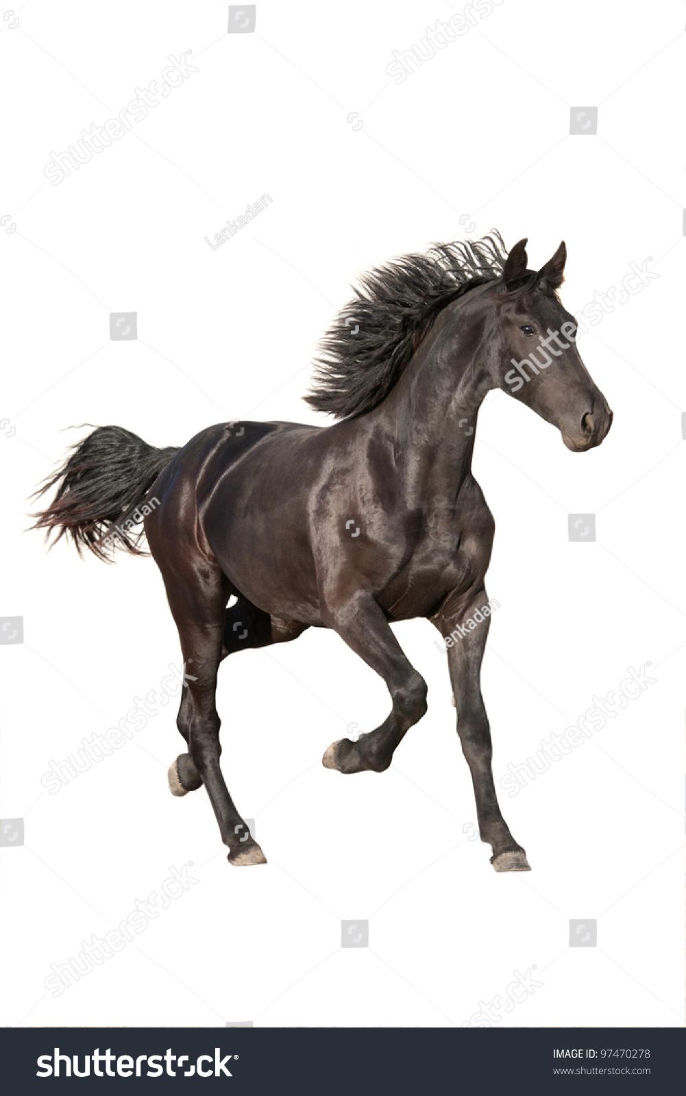 Beautiful Black Horses Running Stock Image - Image: 33770321  |Friesian Horses Running