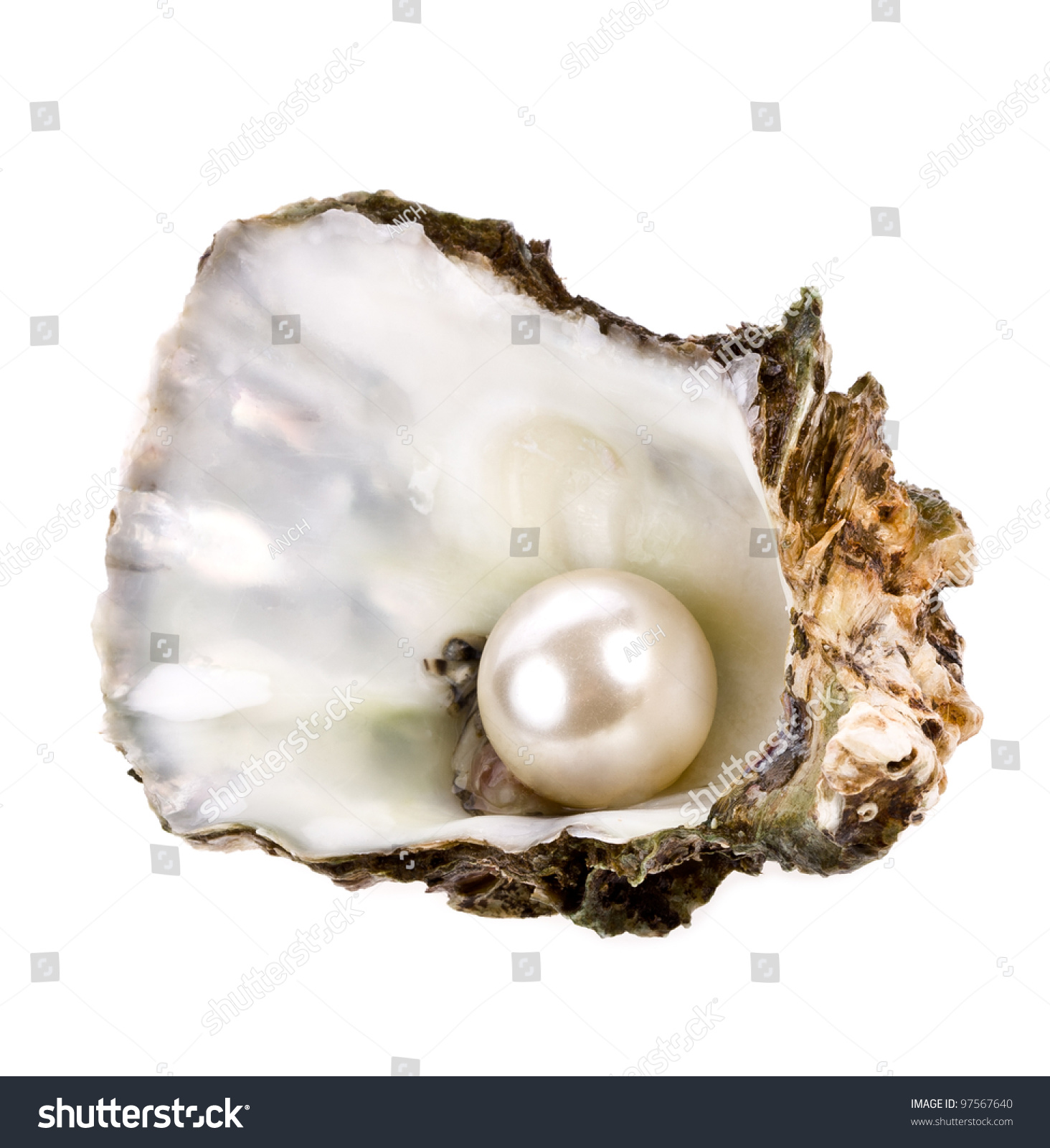 dating oyster shells About cambridge core  δ 14 c values in oyster shell  posing a major obstacle to the use of conchiolin as an alternative material for radiocarbon dating.
