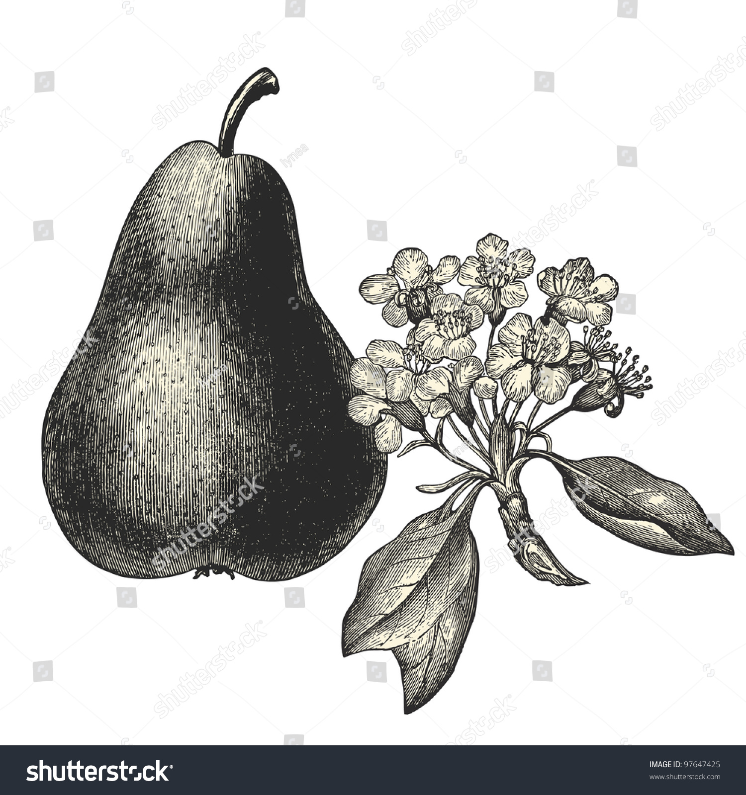 Think, that The vintage pear apologise