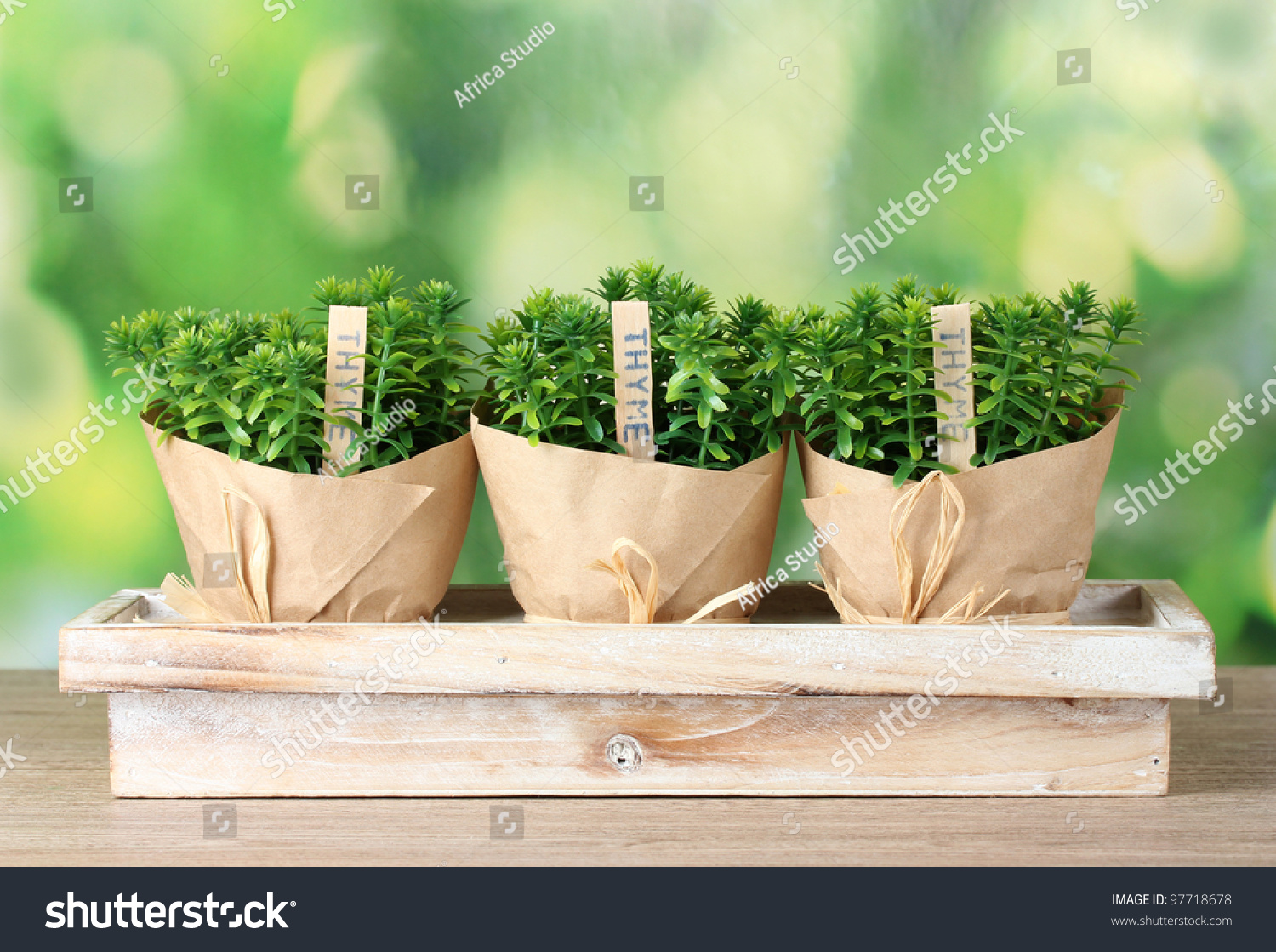 thesis on thyme Doctoral thesis factors can influence the accumulation of antioxidant compounds in self-heal (prunella vulgaris l) and garden thyme (thymus vulgaris l.