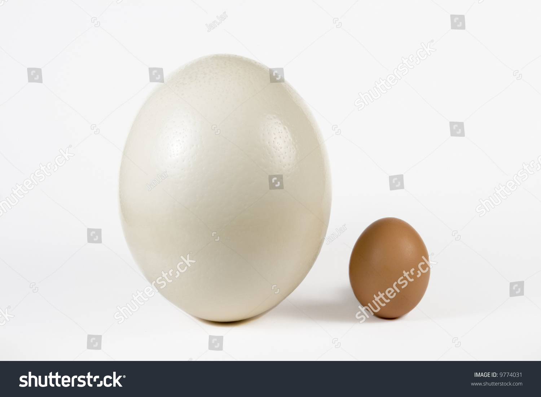 Ostrich Egg Hen Egg Size Comparing Stock Photo 9774031 - Shutterstock