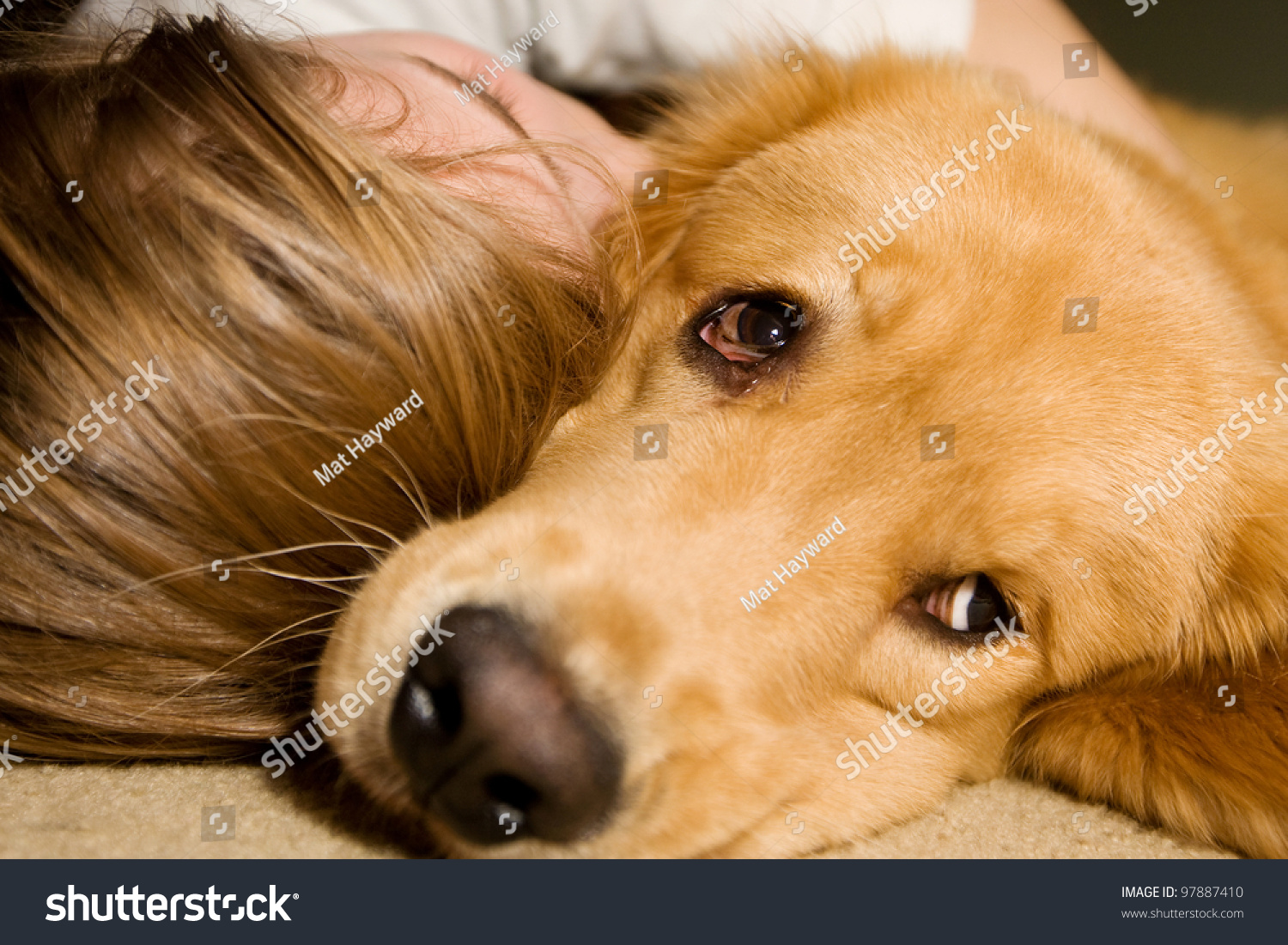 Young Girl Sound Asleep Snuggled Her Stock Photo Edit Now 97887410
