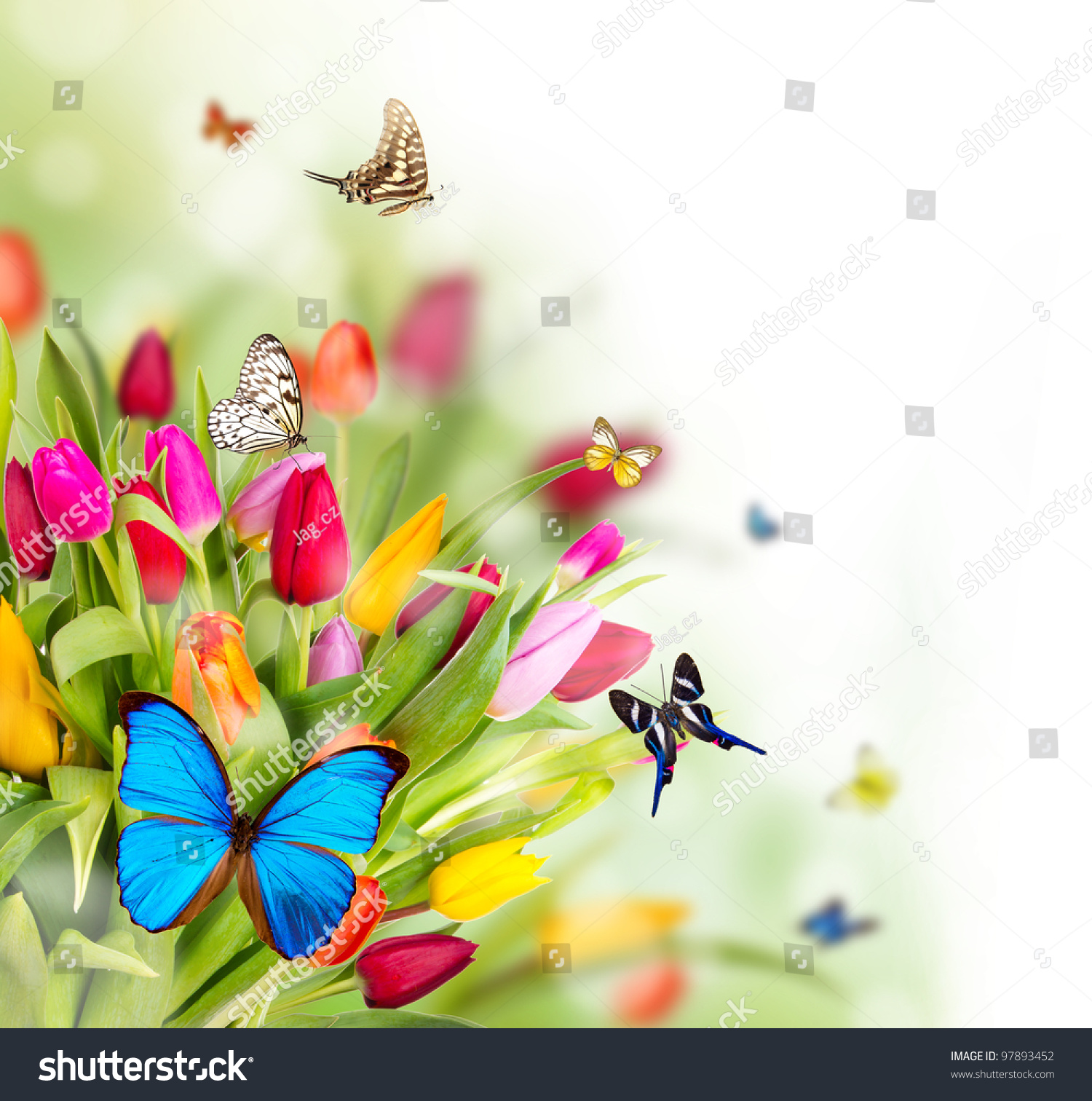 Beautiful Spring Flowers Butterflies Stock Photo Edit Now 97893452