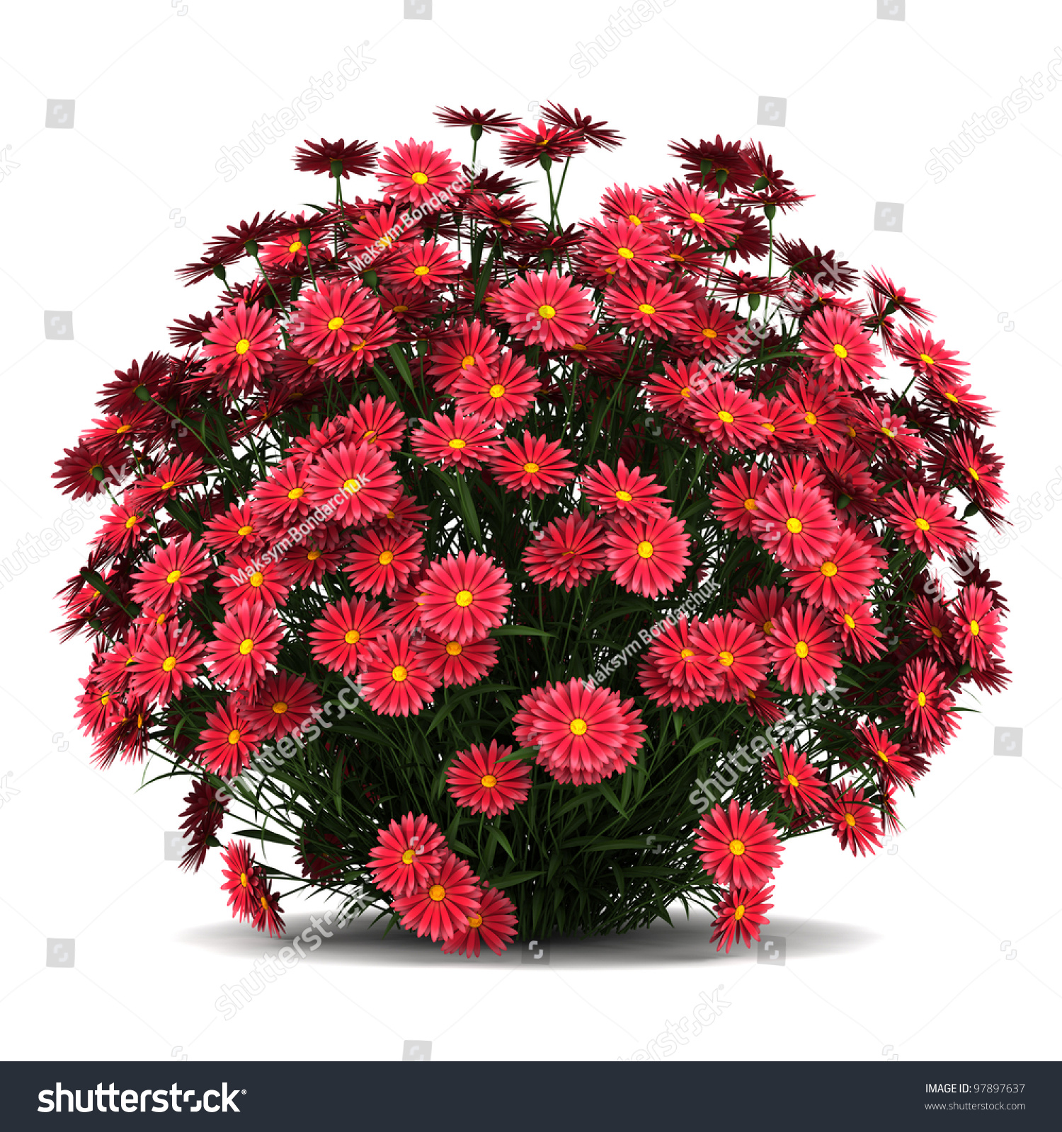 New York Aster Flowers Isolated White Background Stock Sh