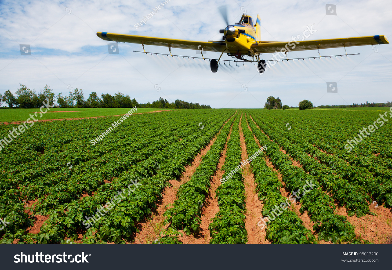 Yellow Crop Duster Spraying Potato Field Stock Photo 98013200 ...