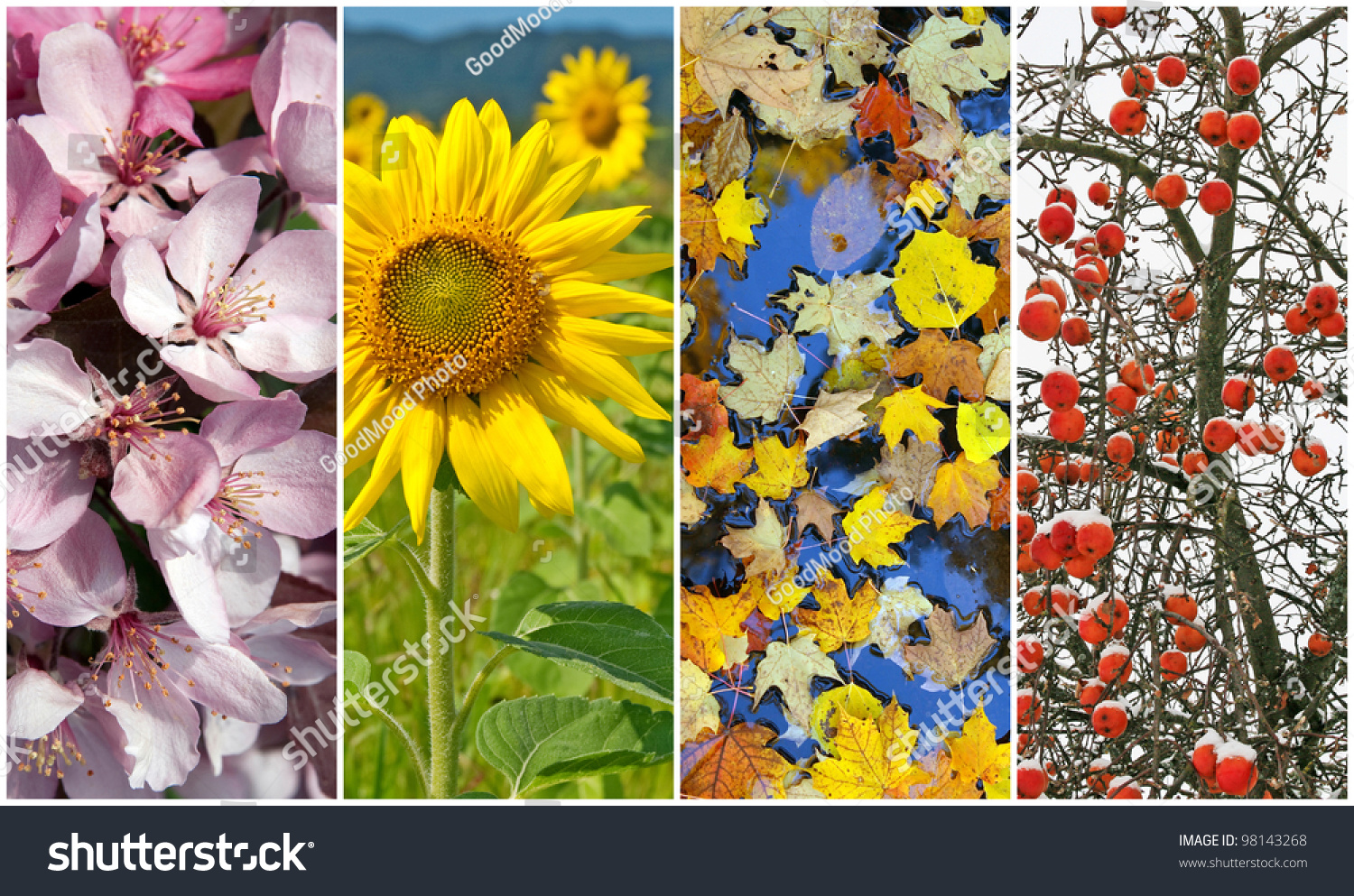 Four Seasons Nature Spring Summer Autumn Stock Photo 98143268 ...