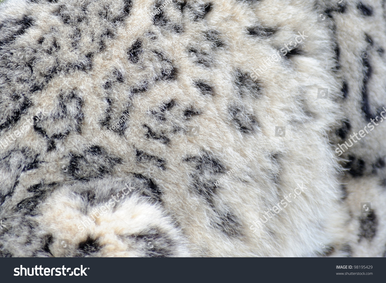 Cheetah Fur Close Up Snow Leopard Cl...