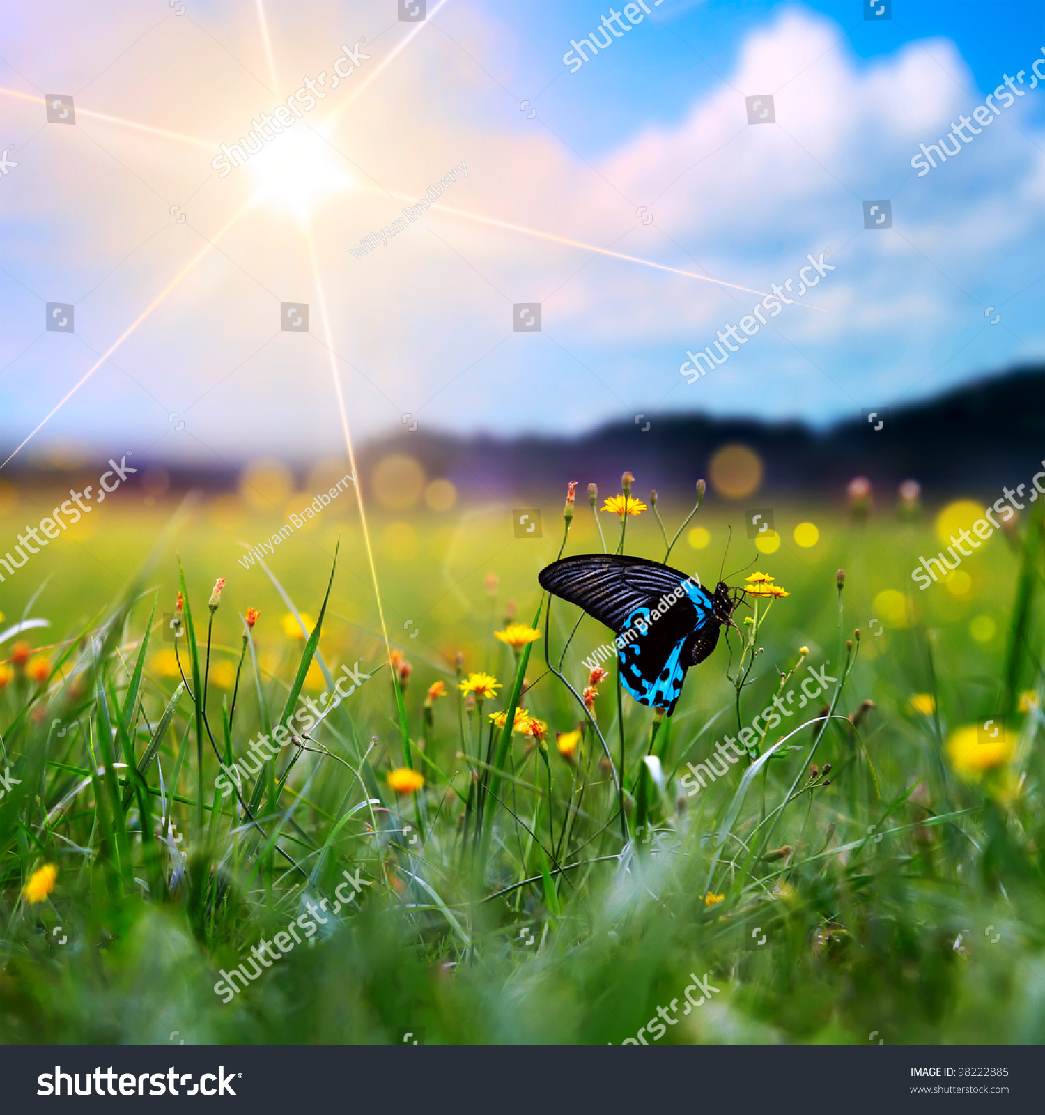 big tropical butterfly sitting on green stock photo 98222885
