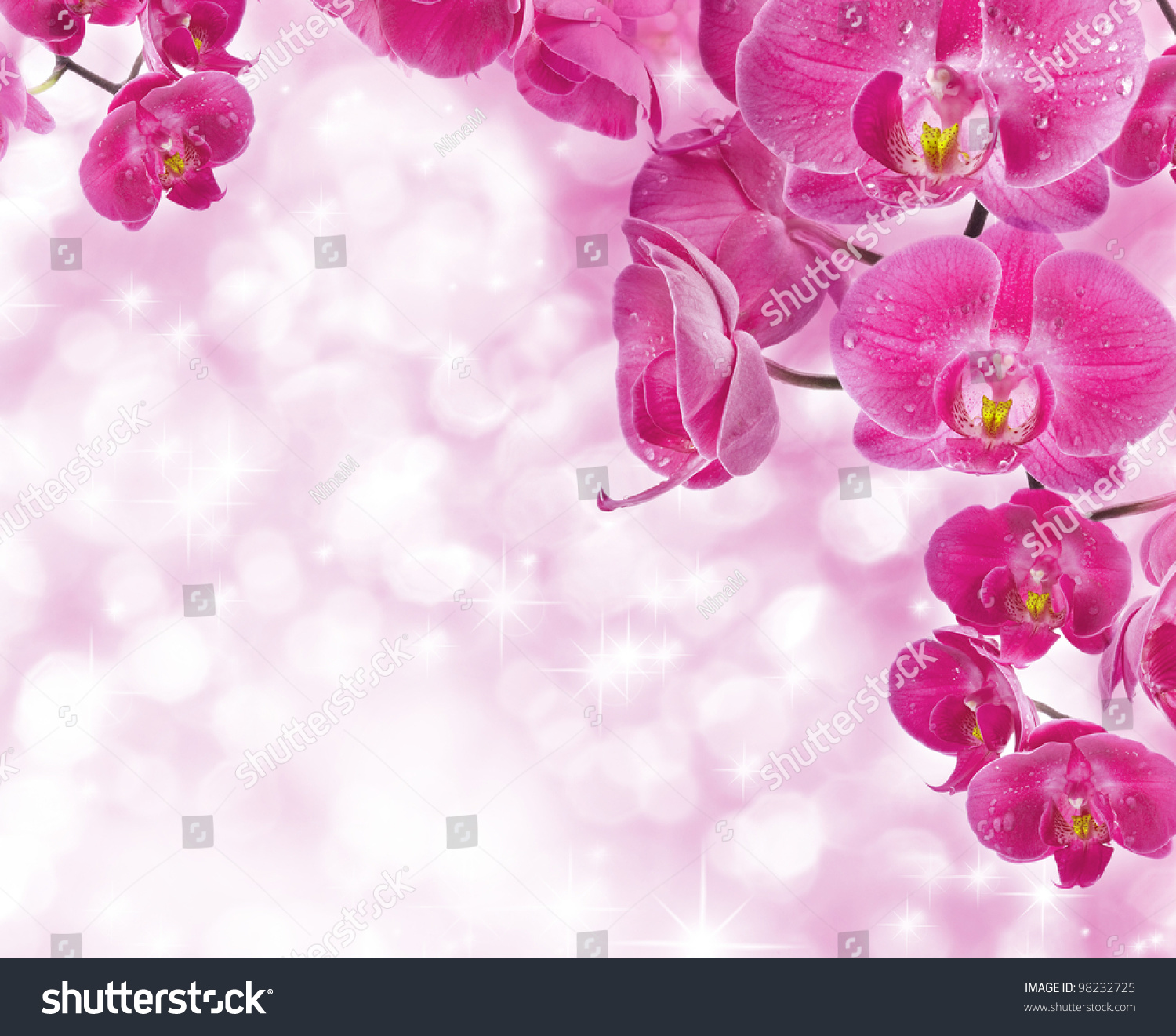 Orchid Flowers Water Drops Greetings Card Stock Photo Edit Now