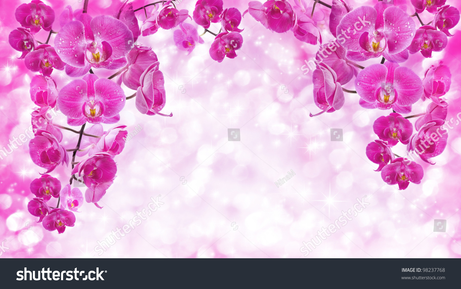 Orchid Flowers Greetings Card Stock Photo Edit Now 98237768
