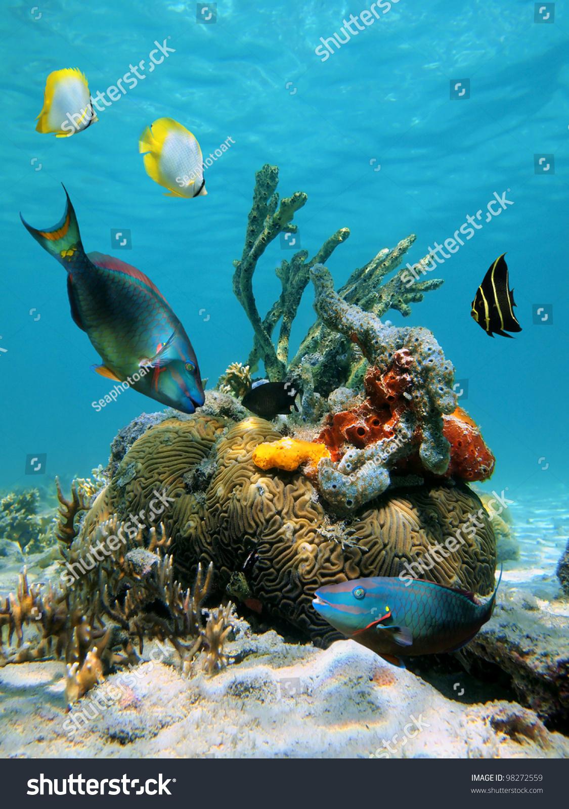 Wallpaper : sea, bay, beach, coast, palm trees, tropical ... |Ocean Life Plant Caribbean