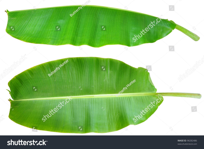 Fresh Banana Leaf Isolated Clipping Path Stock Photo 98282486 ...