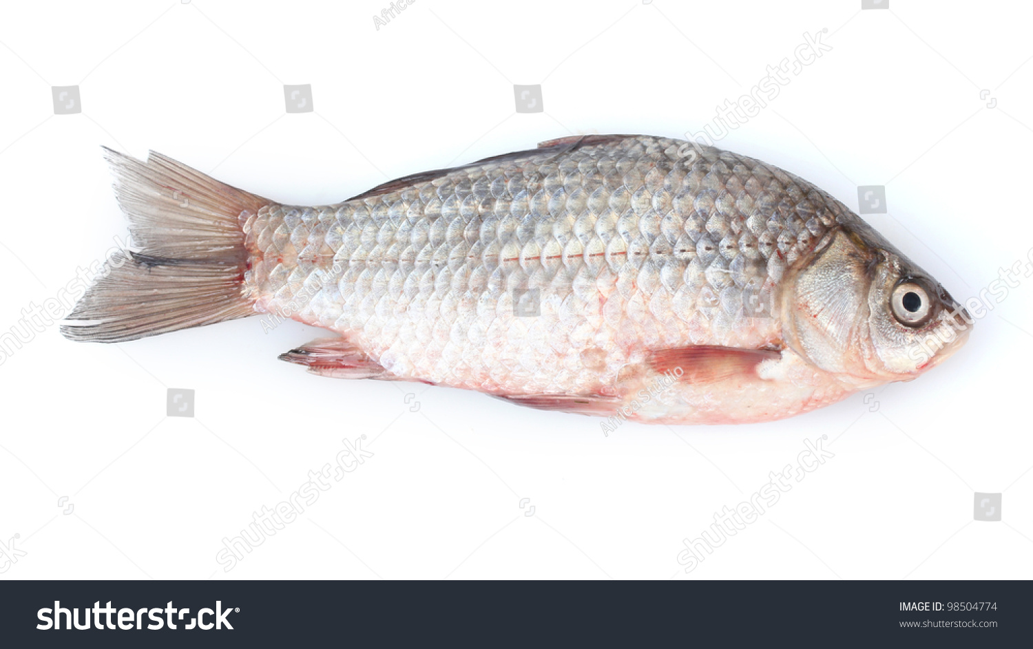 Fresh fish isolated on white stock photo 98504774 for Pictures of white fish