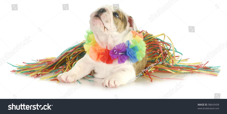 Holiday Dog English Bulldog Wearing Hawaiian Stock Photo