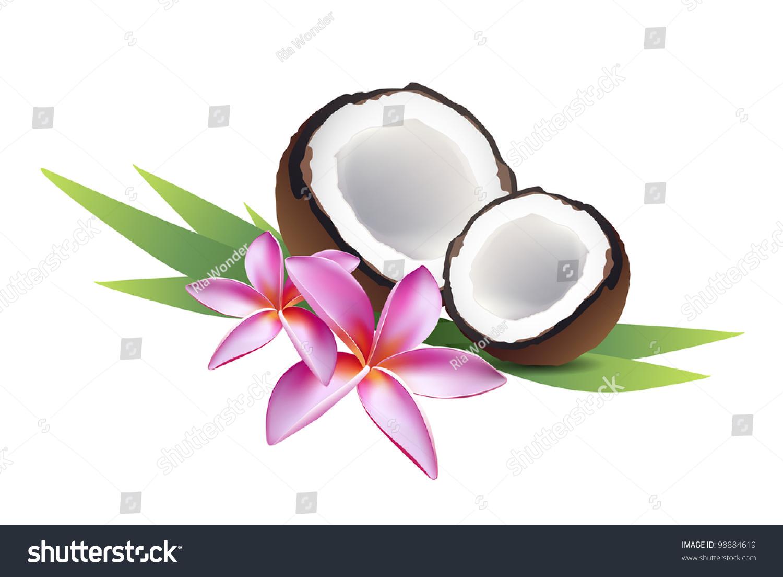Coconut Frangipani Flower Plumeria Stock Vector 98884619 ...