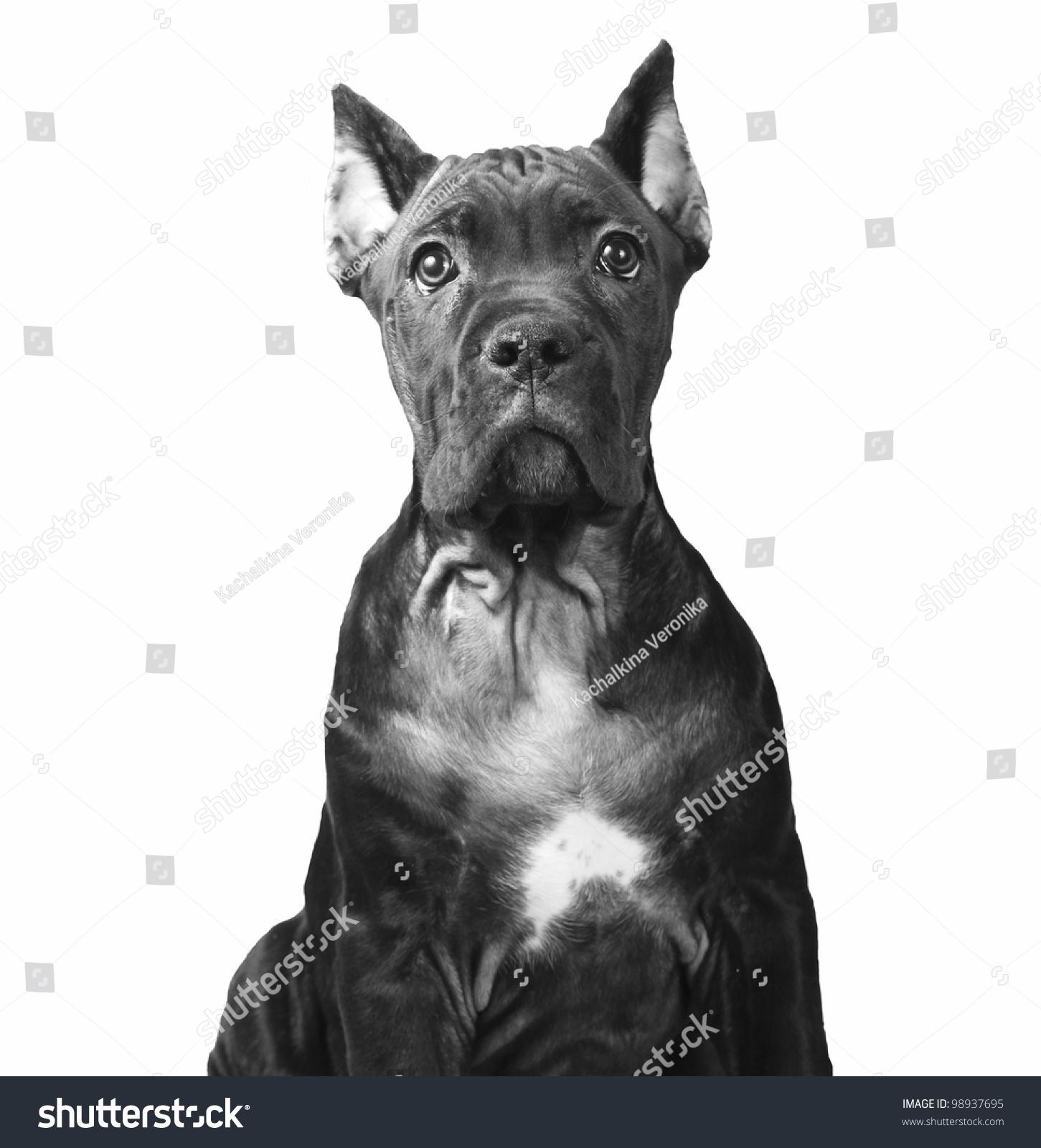 Vintage doggy style