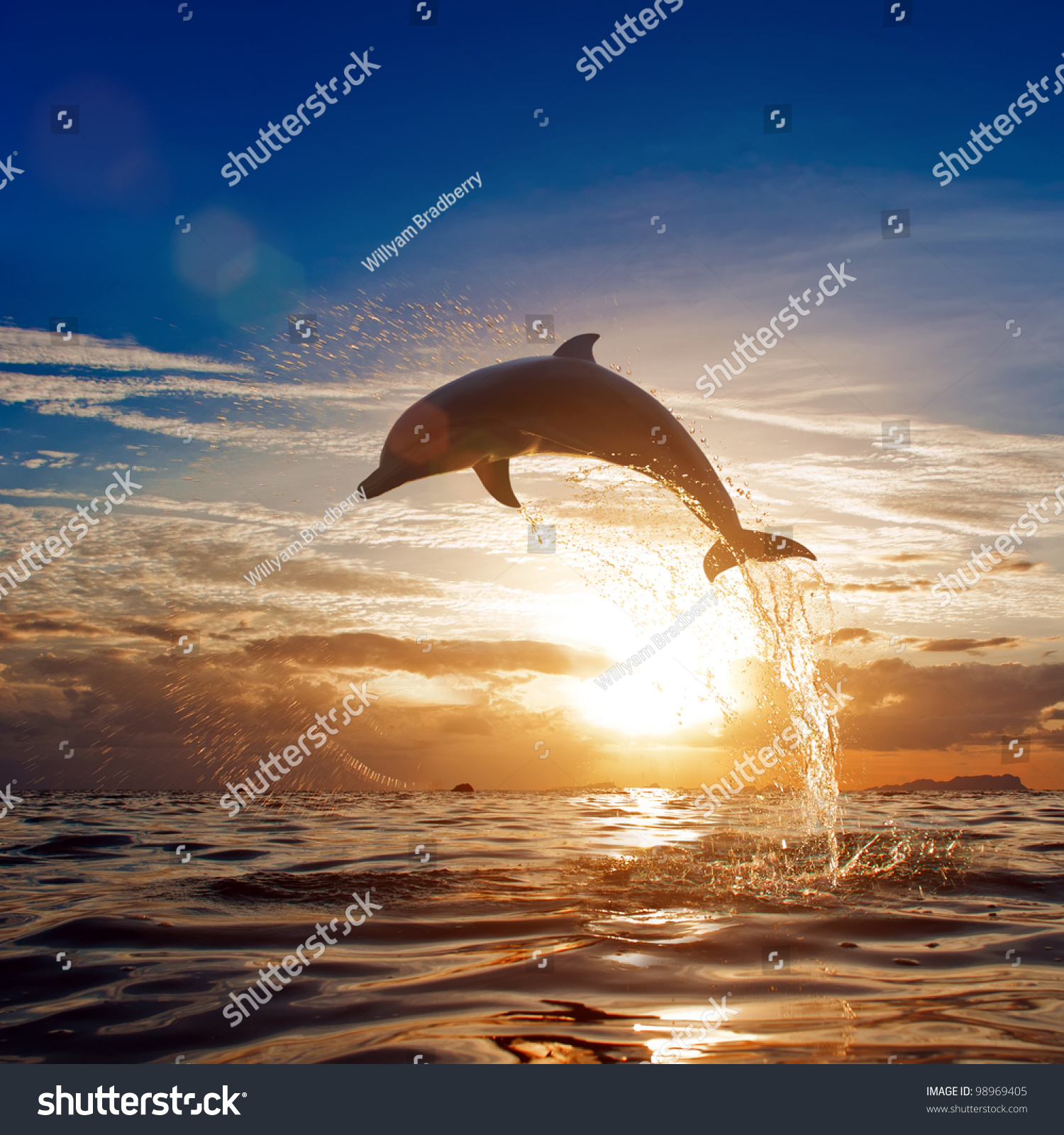 Beautiful Dolphin Leaping Jumping Shining Sunset Stock