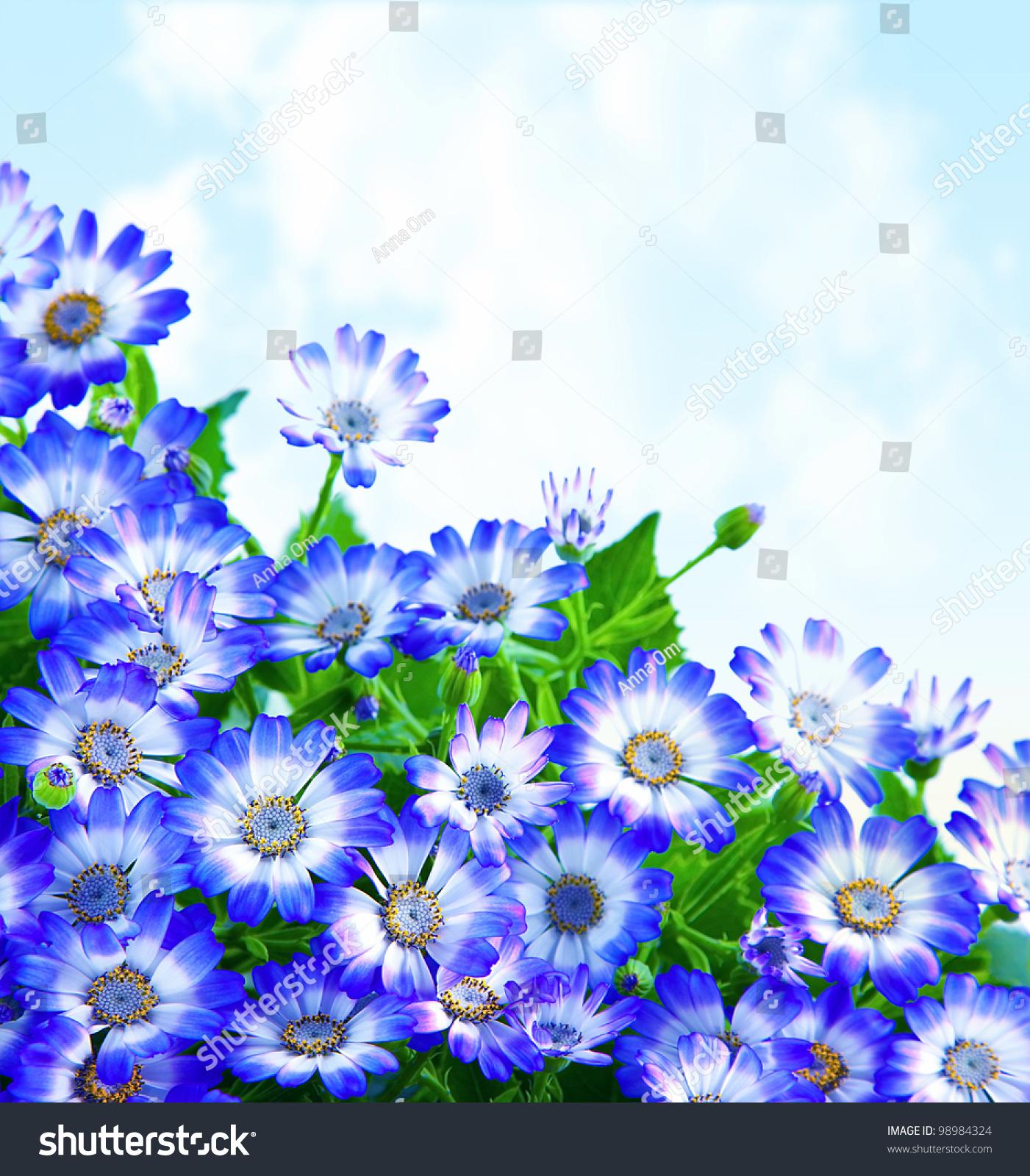 Floral Daisy Border Fresh Spring Blue Stock Photo (Royalty Free ...